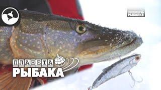 Щука на вибы (раттлины). Зимняя рыбалка. Иртыш | Планета рыбака