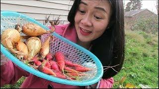 dâu tây mùa đông nhổ cà rốt  hành tây,cho thỏ ăn,