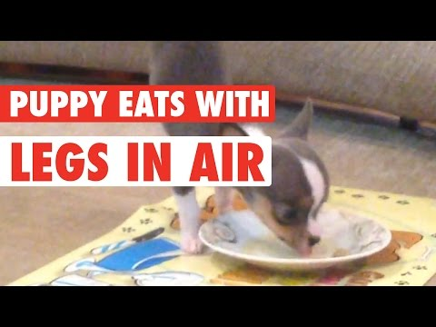 Levitating Pup || Puppy Levitates When Eating