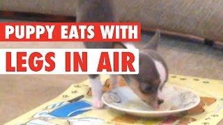 Levitating Pup || Puppy Levitates When Eating