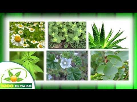 significado y concepto de plantas medicinales curativas
