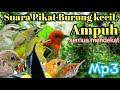 Suara Pikat Burung Kecil Ampuh Untuk Menjebak Audio Pancingan  Mp3 - Mp4 Download