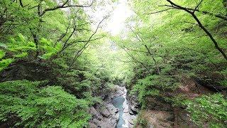 新緑の吾妻峡から八ッ場ダムまでのハイキング*群馬県東吾妻町