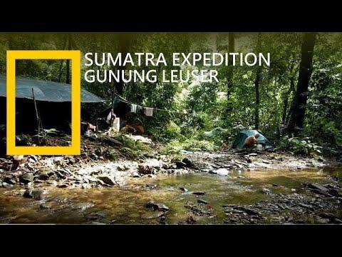 Jungle Trekking Sumatra | Ekspedisi Gunung Leuser | Rainforest | Bukit Lawang