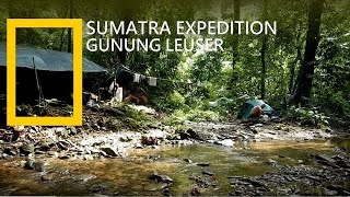 Jungle Trekking Sumatra | Jungle Expedition in Gunung Leuser | Rainforest