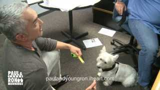 Cesar Millan from Cesar 911 and The Dog Whisperer Trains Paul