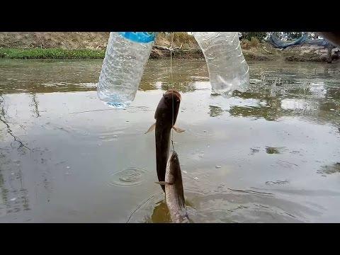 ตกปลาขวด!!ปลาช่อนกินดี!!ด้วยเหยื่อปลาเค็ม??สูตรนี้สุดยอดต้องลอง