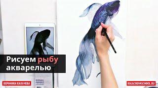 Как нарисовать рыбу акварелью — kalachevaschool.ru — Поэтапный урок с Вероникой Калачевой