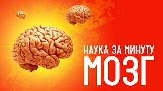 НАУКА ЗА МИНУТУ_Мозг VS суперкомпьютер