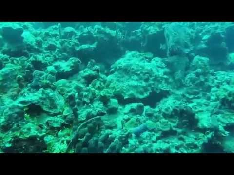 The Bay of Pigs - DIVING CUBA