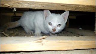 A peaceful little kitten needs help