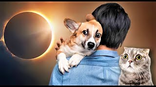 10 Strange Effects of Solar Eclipse