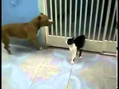 Cat Lightsaber Fights with Dog LOL - YouTube
