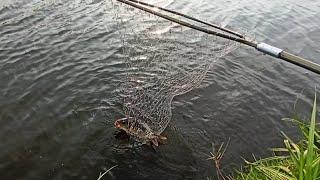 Рыбалка на карпа Очередная ловля карпа в харьковской области