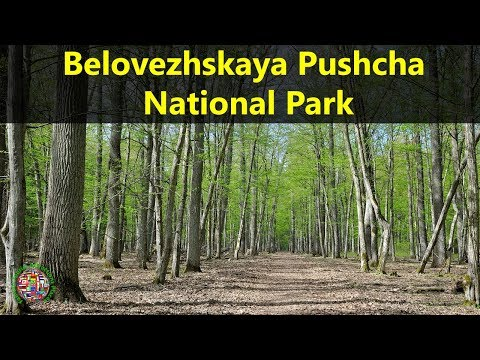 Best Tourist Attractions Places To Travel In Belarus | Belovezhskaya Pushcha National Park Spot
