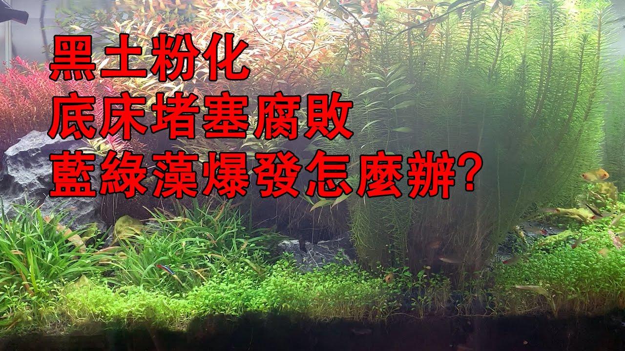 黑土粉化底床堵塞腐敗藍綠藻爆發怎麼辦?教您一招解決所有問題|Clean the bottom bed of the aquarium.