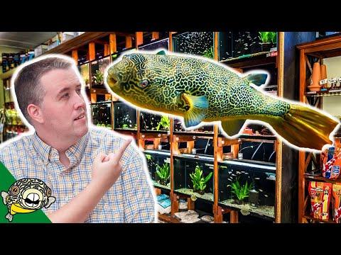 Aquarium Co-Op Local Aquarium Store Tour. The long Version