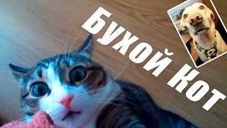 Шарик Шоу - Бухой кот (выпуск 47)