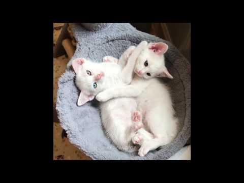 2 Deaf Kitten Siblings Share a Special Bond (Foster Kittens)