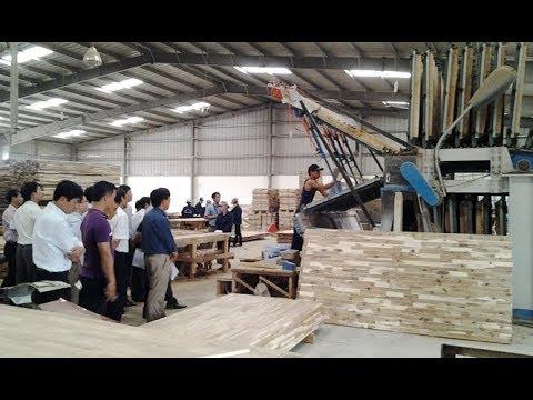 Việt Nam điều tra chống bán phá giá ván gỗ Thái Lan và Malaysia  VTV24