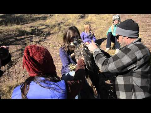 Raptor View Research Institute ~ MT Golden Eagle Project ~