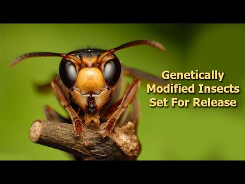 Genetically Modified Vaccines & Insects: Released USA