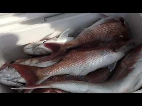 Port Phillip Bay Snapper Fishing Charters October 8th 2016 Reel Time Fishing Charters.
