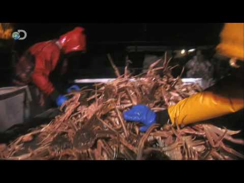 Deadliest Catch Season 5 Finale - Rabid Crab