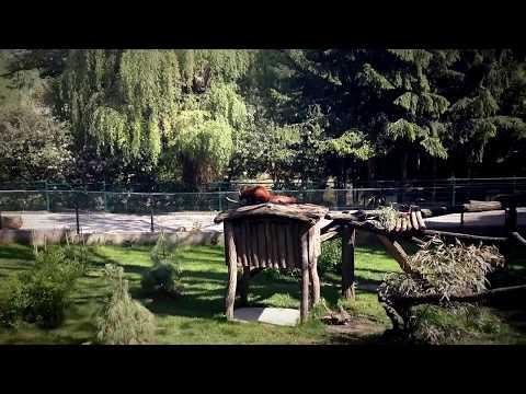 Bojnice (Zoo )Trip 2017