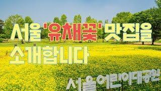 제주감성 피크닉!(feat.유채꽃) 서울어린이대공원에서!썸네일