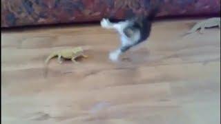 【大笑】物凄い勢いでビックリする猫ちゃん、他(猫 おもしろ動画) Goofy cats thumbnail