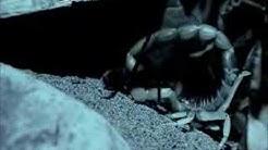 How scorpion locates its prey