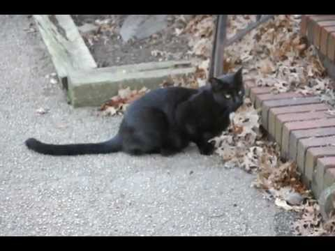 Black Cat on the prowl