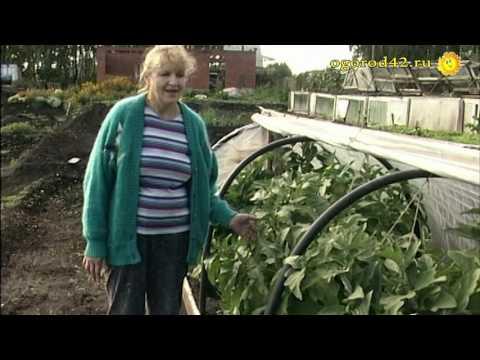 Саженцы Плодовые деревья стр1 купить растения