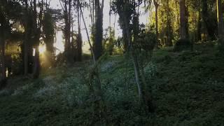Rising into love - Alan Watts  DJI Mavic Pro Drone