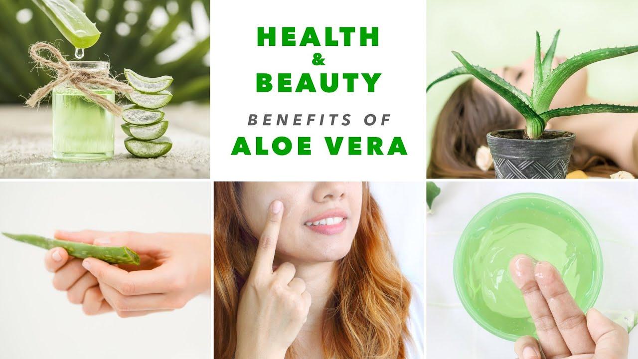 Unbelievable Beauty Secrets of Aloe Vera