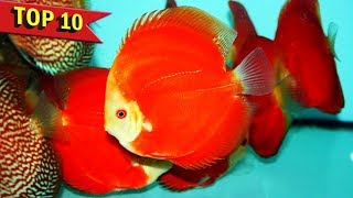 Top 10 Expensive Discus Fish Varieties