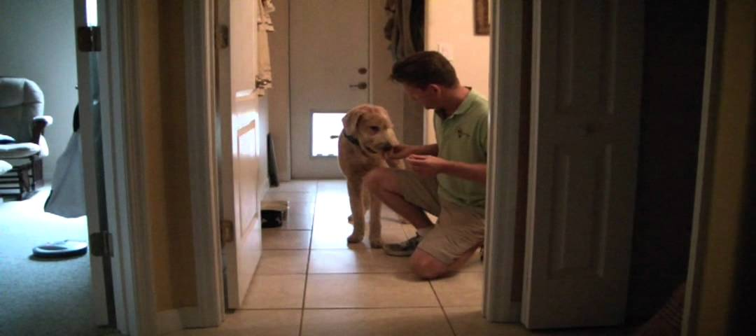 Indoor Dog Fence Demonstration - YouTube