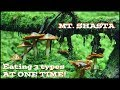 Psilocybin Mushroom GODLY Trip Report at Mt. Shasta