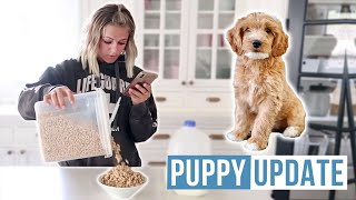 You are ALWAYS  on Your Phone | Puppy Update | The  LeRoys