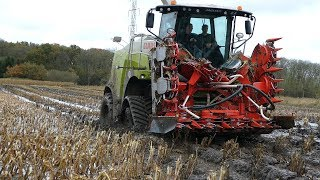 Claas Jaguar 950 Taking a Bath & Working Hard During Maize Season | Muddy & Wet Conditions | DK Agri