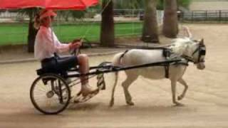 Attaching Umbrella To Miniature Horse Cart