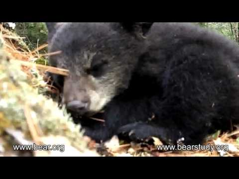 Moments in Lily the Black Bear's life
