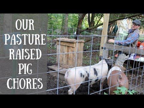 Happy Pigs Make Great Tasting Pasture Raised BACON!