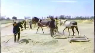 Уйгурские крестьяне в СУАР. 1980 год. город Кучар