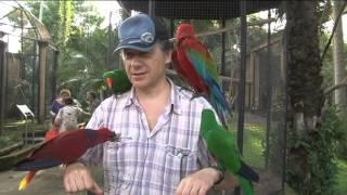 Птицы рая. Birds of paradise