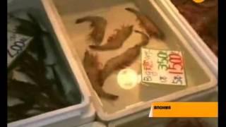 В Японии впервые обнаружили зараженную радиацией рыбу