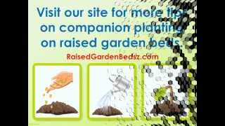 The Best Tips for Raised Bed Gardening with Companion Plants