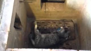 Усыпить кота,кошку(http://miraved.ru/usypit-kota-koshku/ Если Вы решились усыпить кота/кошку, то лучше всего это сделать вне дома., 2016-03-12T15:10:10.000Z)