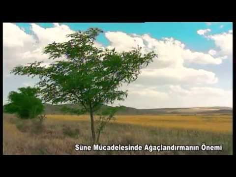 Süne Mücadelesinde Ağaçlandırmanın Önemi